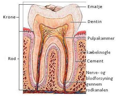 Efter rodbehandling af din tand
